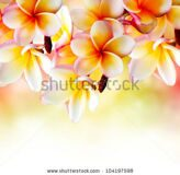stock-photo-frangipani-tropical-spa-flower-plumeria-border-design-104197598