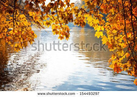 stock-photo-abstract-background-of-autumn-leaves-autumn-background-154493297