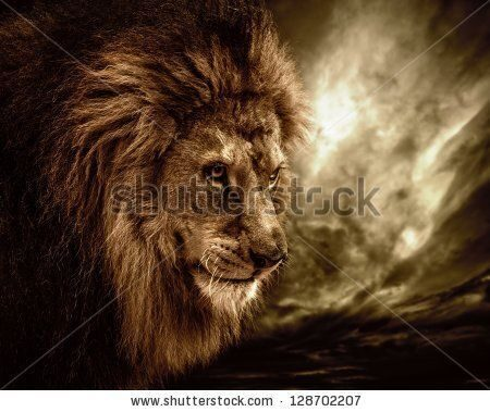 stock-photo-lion-against-stormy-sky-128702207