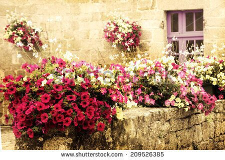 stock-photo-old-stone-house-decorated-with-colorful-petunia-flowers-in-medieval-town-moncontour-brit