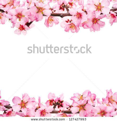 stock-photo-spring-flowering-branches-pink-flowers-no-leaves-blossoms-almond-isolated-on-white-backg