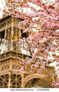 stock-photo-spring-in-paris-bloomy-cherry-tree-and-the-eiffel-tower-focus-on-flowers-172491368