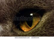 stock-photo-the-yellow-cat-s-eye-extreme-macro-221931445
