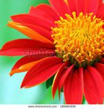 stock-photo-red-flower-186984956