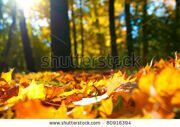stock-photo-macro-photo-of-a-fallen-leaves-in-autumn-forest-shallow-dof-80916394