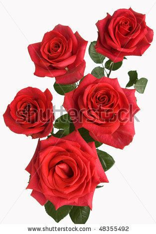 stock-photo-a-bunch-of-red-roses-48355492 (1)