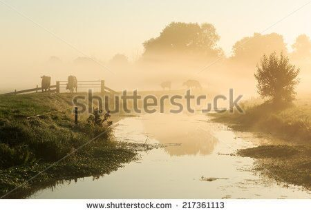 stock-photo-dutch-countryside-cows-on-a-dike-of-a-small-river-in-during-a-foggy-sunrise-217361113
