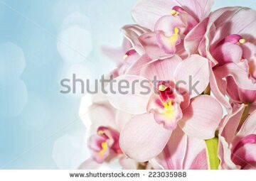stock-photo-orchids-223035988