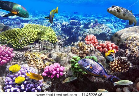 stock-photo-coral-and-fish-in-the-red-sea-egypt-114522646