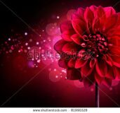 stock-photo-dahlia-autumn-flower-design-over-black-81990328