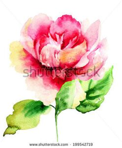 stock-photo-beautiful-peony-flower-watercolor-painting-199542719