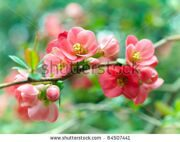 stock-photo-spring-blossoms-64507441