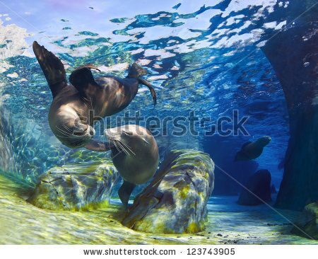 stock-photo-playful-california-sea-lions-zalophus-californianus-come-together-for-a-kiss-underwater-