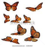 stock-photo-collection-of-monarch-butterflies-153840917