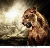 stock-photo-roaring-lioness-against-stormy-sky-127867151