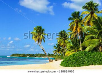 stock-photo-paradise-beach-with-amazing-palm-trees-entering-the-azure-ocean-198884966