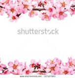 stock-photo-spring-flowering-branches-pink-flowers-no-leaves-blossoms-almond-isolated-on-white-background-127427993