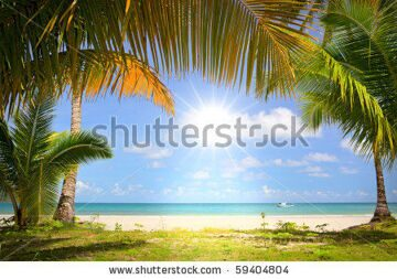 stock-photo-sun-in-blue-sky-and-palm-trees-gateway-to-white-sand-beach-59404804