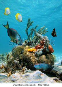 stock-photo-colorful-fish-and-tropical-marine-life-in-the-caribbean-sea-98272559