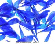 stock-photo-close-up-of-colorful-petals-against-white-background-5869687
